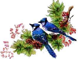 coleccion de gifs gifs aves navidenas