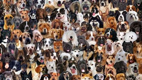how to tell what breed your is what breed is my here s how to tell your s breed top tips