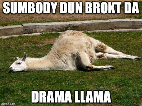 drama llama meme www pixshark com images galleries