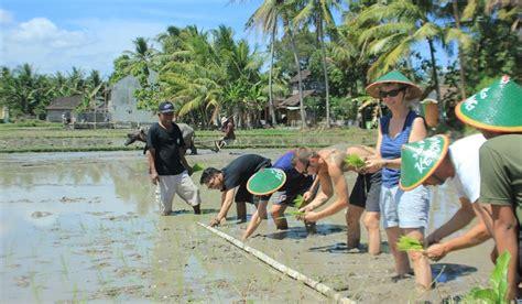 pemkot segera bangun taman wisata pertanian netizenkucom