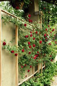 climbing roses trellis and honey how to make a custom trellis