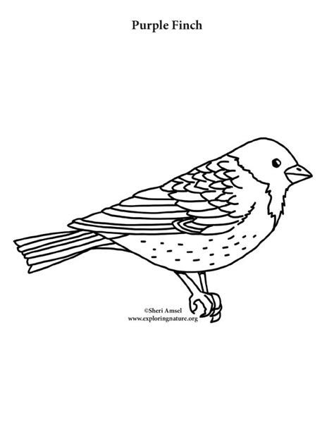 yellow finch coloring page yellow finch page coloring pages