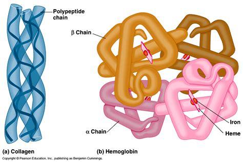 protein vs enzyme biochem80p stepping into the biochemistry realm page 2