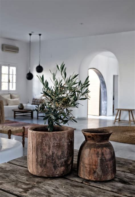 decorative trees for the home guide to growing olive trees indoors homesthetics