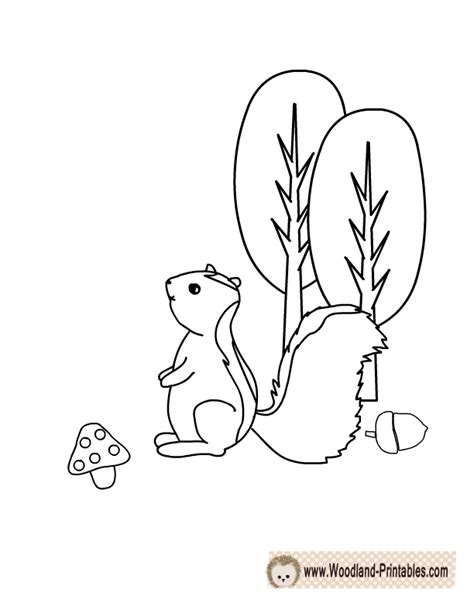 Skunk Coloring Pages Printable by Free Printable Woodland Animals Coloring Pages
