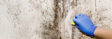 anti schimmel coating badkamer anti schimmel coating bescherm je huis tegen schimmel