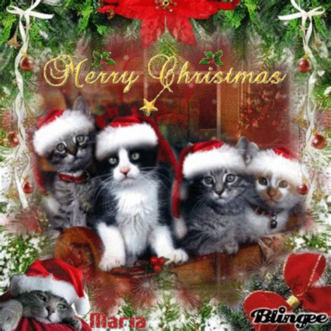 images of merry christmas kittens christmas cats merry x mas ramblings of an asparagus
