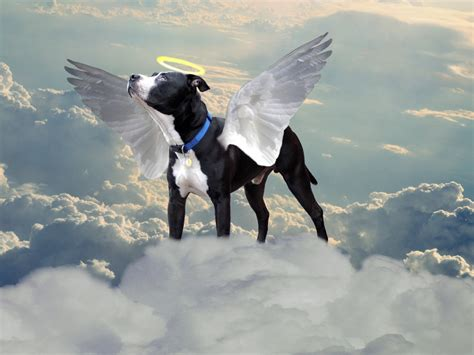 dogs in heaven david bentley hart jumps the shark why animals don t go to heaven discourse