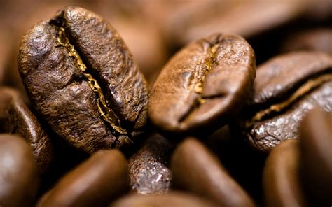 coffee brown wallpaper hd coffee beans background hd 42418 2560x1600 px