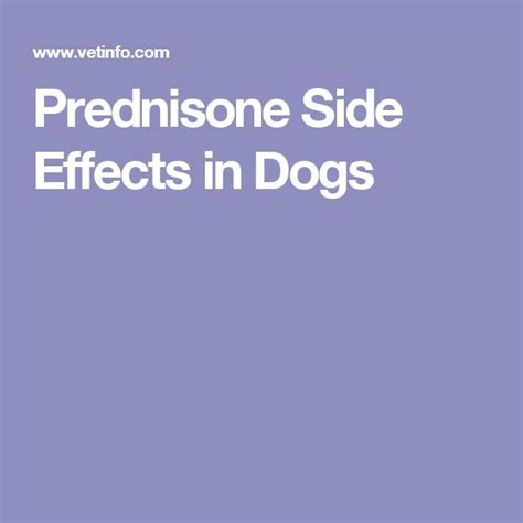 side effects of prednisone in dogs 425 best pets images on