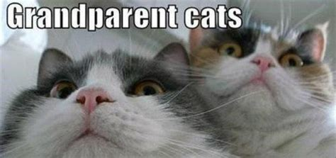 Best Cat Memes - best cat memes modern cat magazine