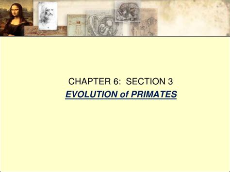 chapter and section chapter 6 section 3 evolution of primates