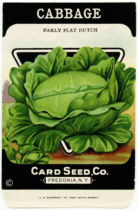 Free Vintage Image Card Seed Co Cabbage Packet Old Free Vegetable Garden Seeds