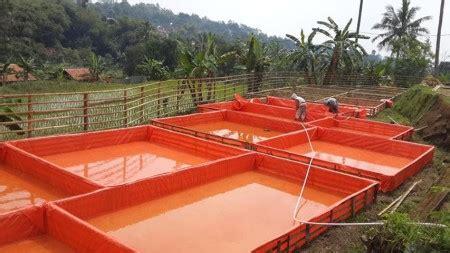 Bibit Lele Per 1000 Ekor panduan cara budidaya ikan lele pembesaran untuk pemula