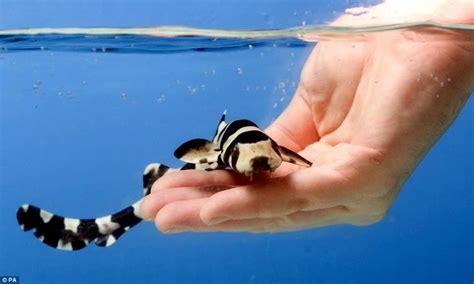 baby shark in mandarin 17 best ideas about saltwater aquarium on pinterest