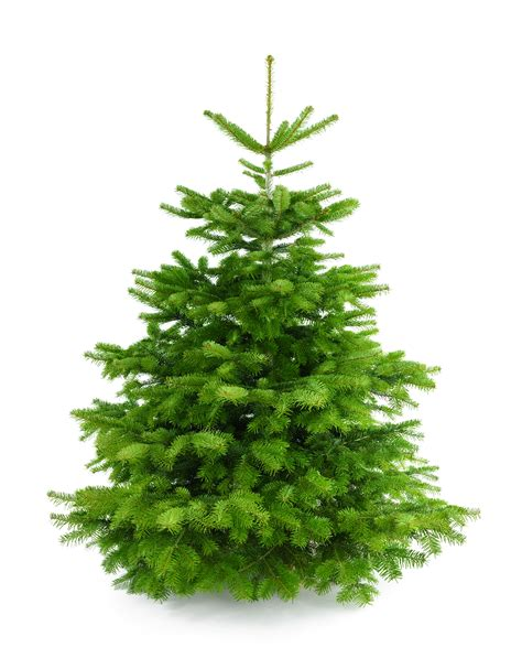 nordmann fir christmas tree home depot where to buy a tree in glendale ca 2017