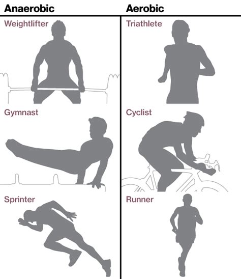 aerobic vs anaerobic your personal trainer