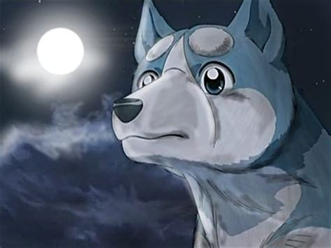 anime dogs vs wolf anime www pixshark images galleries with a bite