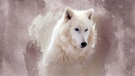 white wolf wallpapers wallpaper cave free hd wolf wallpapers wallpaper cave