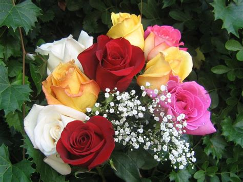 imagenes rosas color foto de rosas de colores imagen de rosas de colores muy