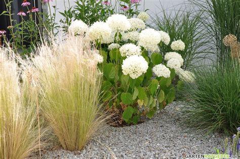 engelshaar pflanze federgras federgras sonnenhut und hortensie