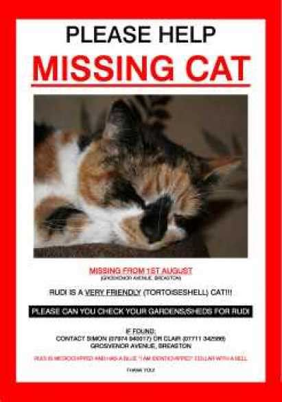 21 Free Missing Cat Poster Template Word Excel Formats Lost Cat Poster Template Free