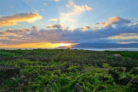 file landscape of the pico island vineyard culture jpg
