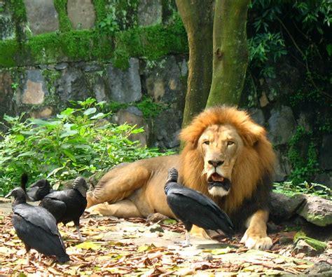 imagenes de animales zoologico los animales del zoologico imagui