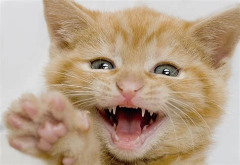 do dogs lose baby teeth when do puppies and kittens lose their baby teeth