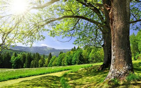 world most beautiful nature wallpaper wallpapersafari most beautiful wallpapers ever wallpapersafari