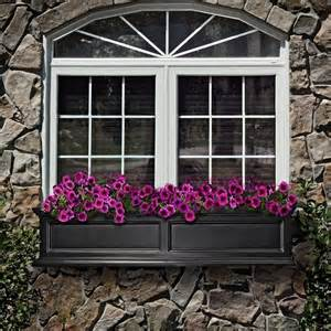 gorgeous window box outdoors and flowers