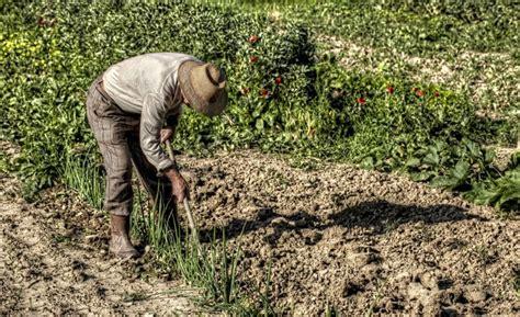 casa contadino contadini on line l orto 232 a distanza e la verdura a casa