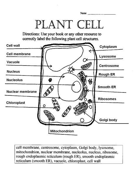 Animal Cell Worksheet
