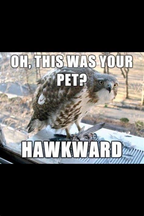 Hawkward Meme - hawkward memes fails and just plain funny things