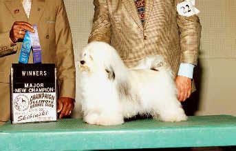 wyndmist havanese our havanese bred by dogs riverhill havanese