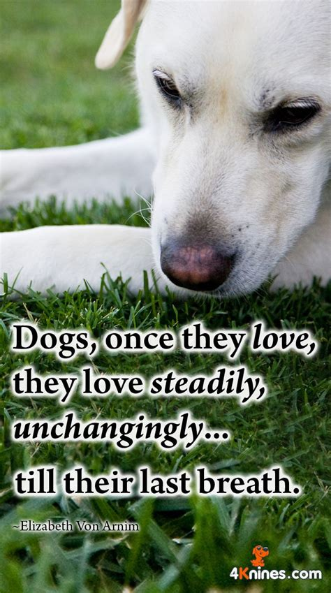how does puppy breath last 1000 images about inspirational quotes on your pets and a