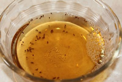fruit flies trap how to trap and get rid of fruit flies just one donna