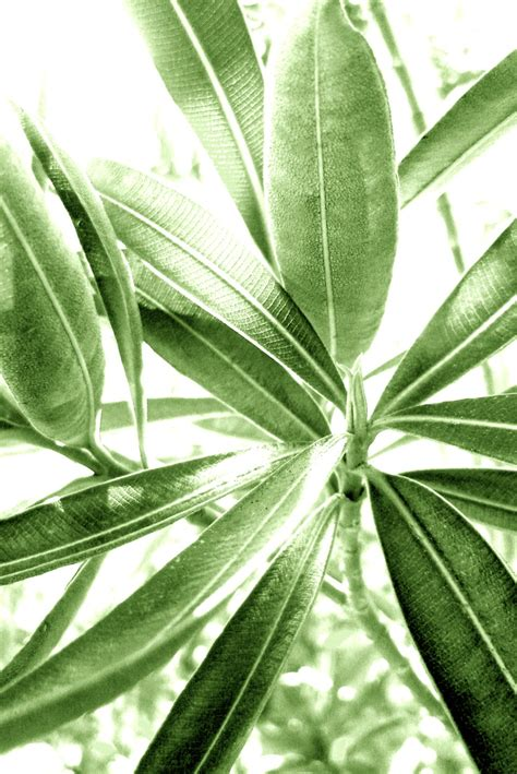 tropical plant leaves tropical florida leaf green plant beautiful green
