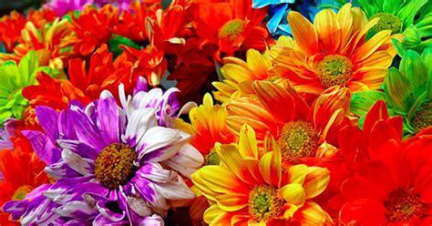 sanremo festa dei fiori petizione rivogliamo i fiori durante il festival di