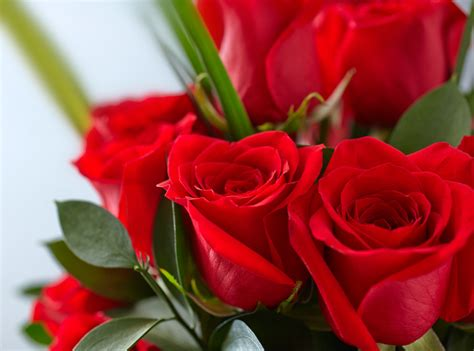 red roses bouquets    blush blooms  pune