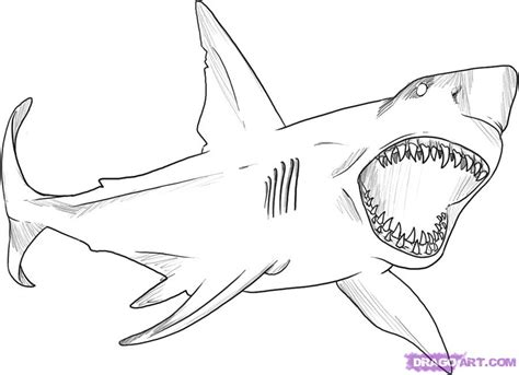 big shark coloring page how to draw a great white shark step by step fish