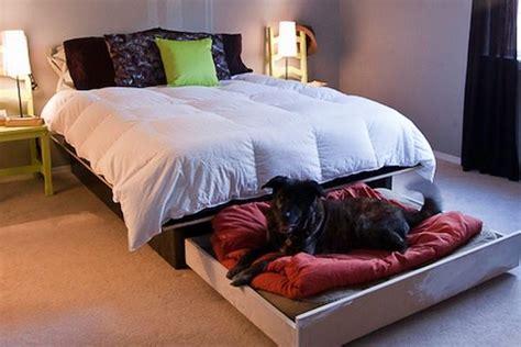 dog platform bed diy platform bed with a roll out dog bed house interior