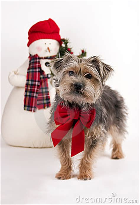 xmas tree with yorkies yorkie poo stock photography cartoondealer 17132060