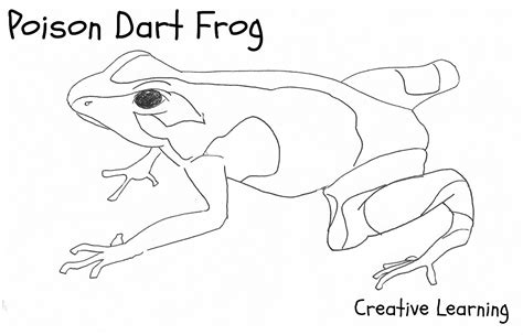 Coloring Page Poison Dart Frog | free printable frog coloring pages for kids