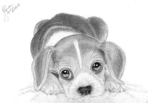 draw realistic puppy realistic puppy drawings easy realistic puppy drawing top images pictures to draw