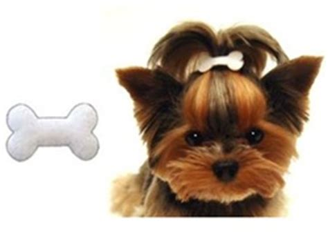 hair accessories for yorkie poos bone head hair bow accessories hair bows clips posh