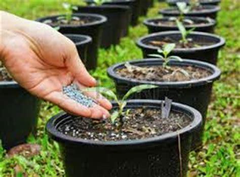 Pupuk Untuk Bunga Teratai tips cara memupuk tanaman hias dalam pot situs tanaman