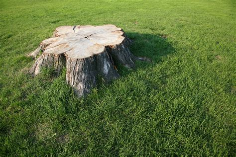 what is a tree trunk covered with 4 letters home remedies to kill a tree stump home guides sf gate