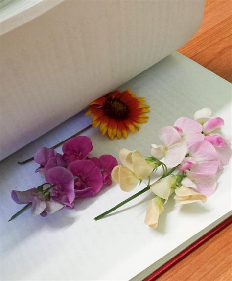 how to press flowers for perfectly dried petals homesteading