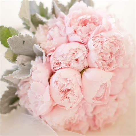 peonies bouquet flower guide peonies bridalguide